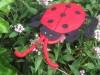 Lady bird beetle hand puppet